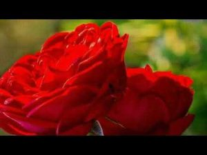 BEST URDU POETRY | NEW URDU SMS COLLECTION |HEART TOUCH POETRY | VISIT TV