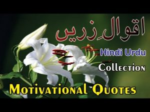 Motivational Quotes Collections   Urdu Hindi Quotes Collection   New Quotes Forever   Life Quotes