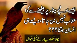 Unique Urdu Words By Zubair Maqsood | Quotes In Urdu | Motivational Hindi Quotes | Aqwal e Zareen