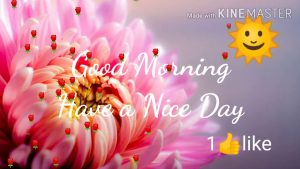 Good morning Images photos cute flowers with shayari share on Social friends