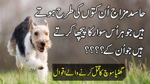 Precious Words In Urdu   Quotes About Success   New Quotes On Love   Hindi Quotes   Aqwal E Zareen