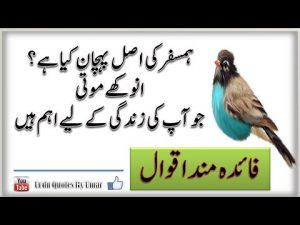 Urdu Islamic Quotes about Life || Best Islamic Quotes || Best Collection of Islamic Quotes in Urdu